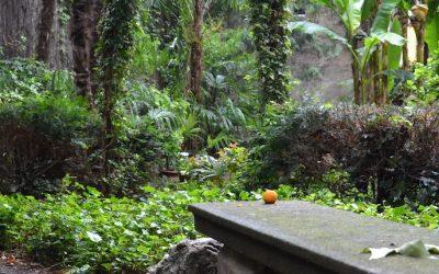 Sabato 20 maggio – Giardini aperti – Passeggiata